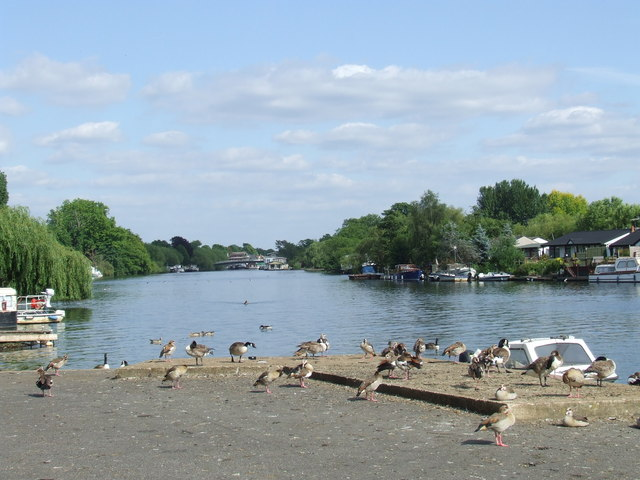 Geese at Hampton
