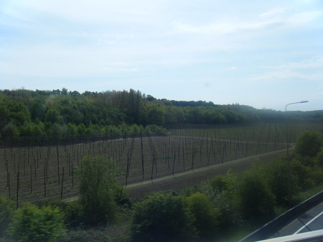 Hop fields from A2