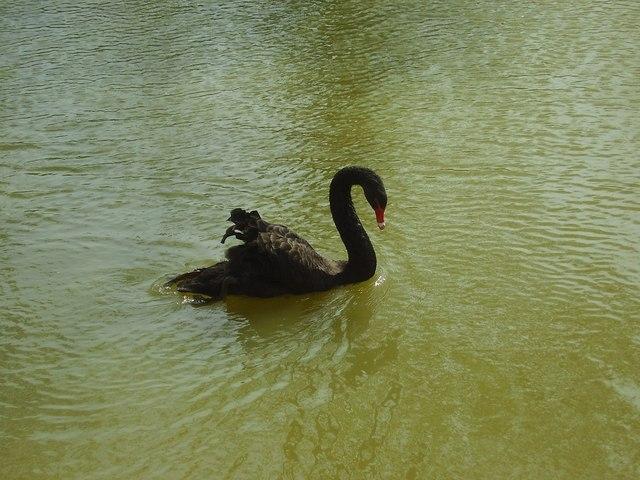 Black Swan St Peters Hall