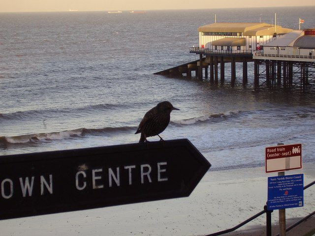 Starling on the Centre