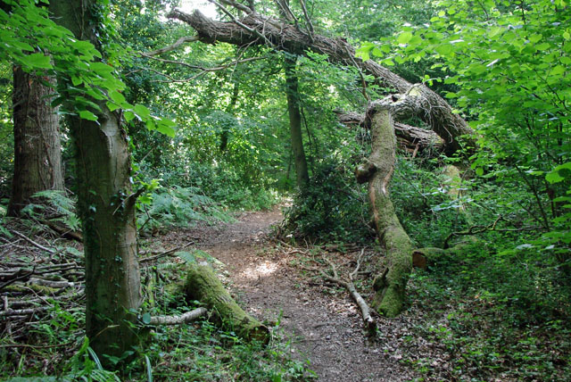 Footpath through Stewards Copse