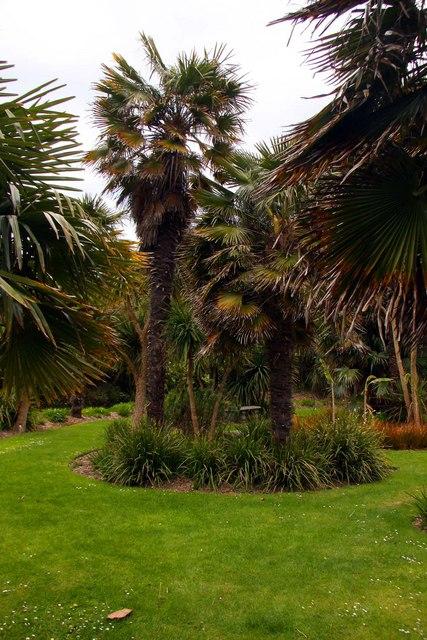 Palms at Ventnor Botanic Gardens