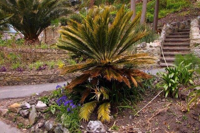 Bluebells and palm