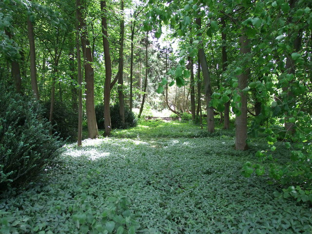 Overgrown path in the Gardens of Easton Lodge