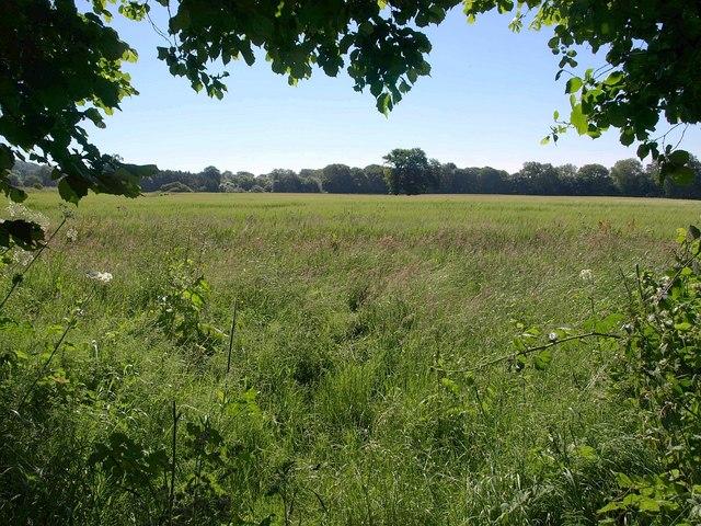 Field beside New Cut