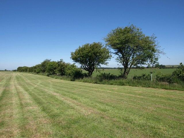 Hedge near Dursdon Drove Farm