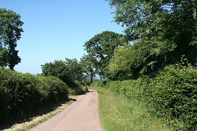 Sampford Peverell: lane near Butteridge Plantation