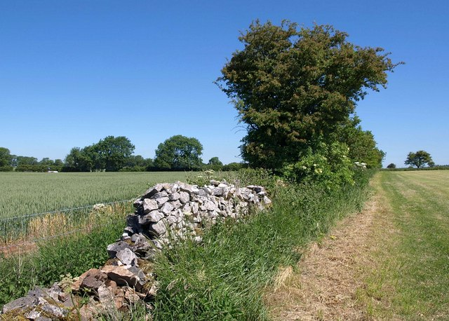 Wall by Monarch's Way