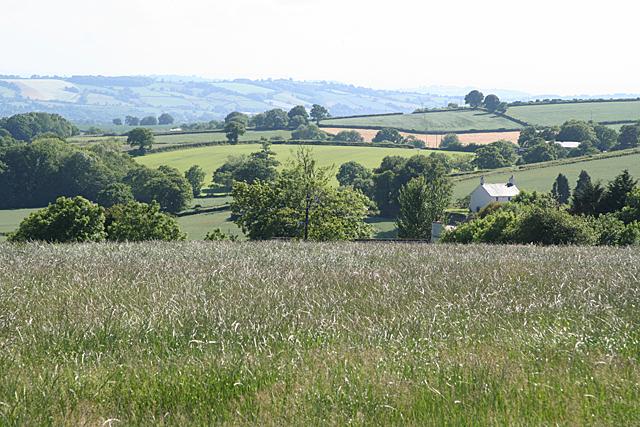 Sampford Peverell: above Little Ridge