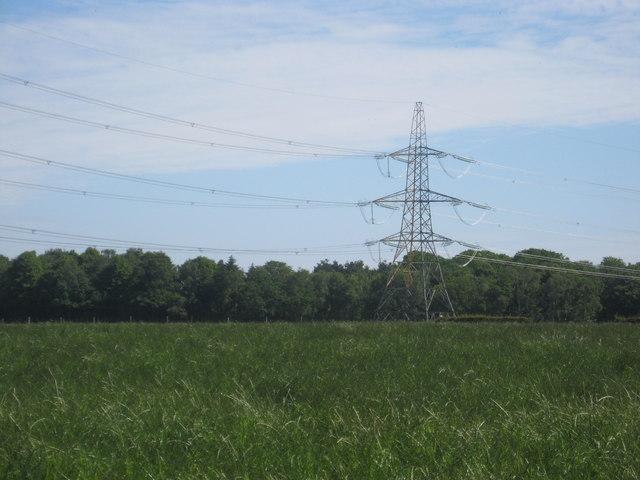 Grasslands near Hirsel Law