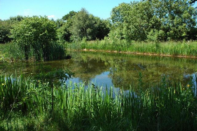 Pond at Knighton