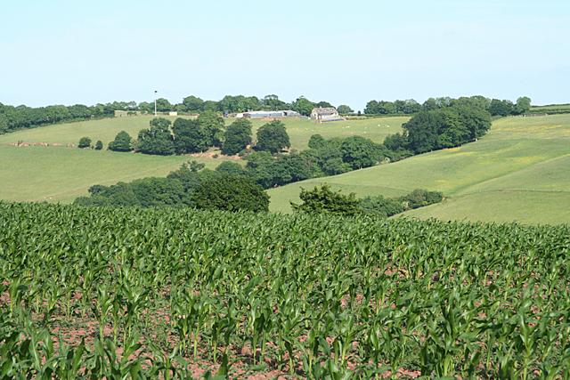 Uplowman: towards Newmill Farm