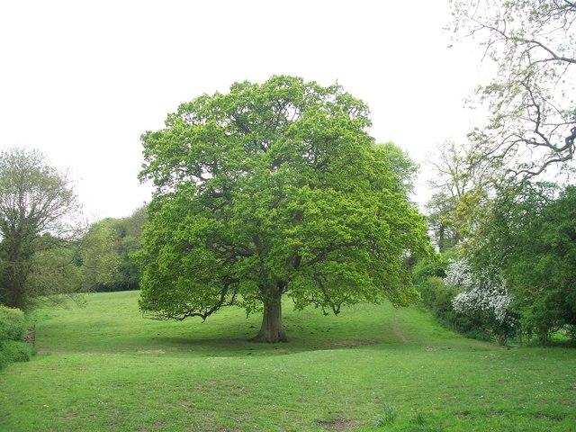 A fine tree