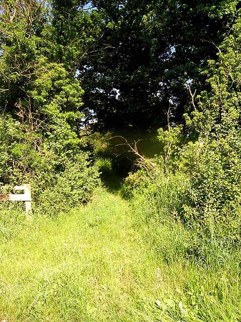 Bridleway east of Ellerton