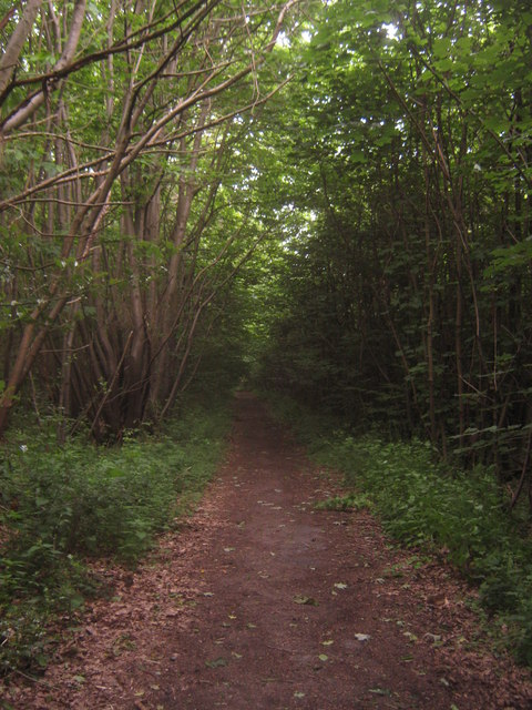 Bridleway in Capel Wood