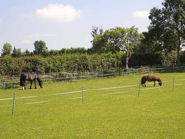 Horses in paddock at Soudley
