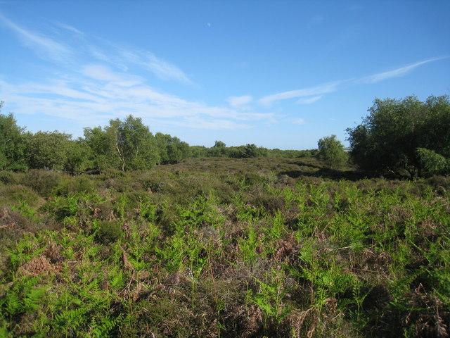 Blue skies & Studland Heath