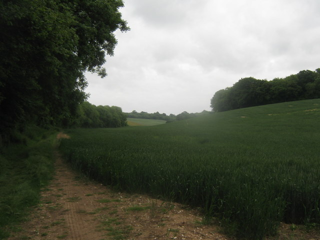 Field between two woods