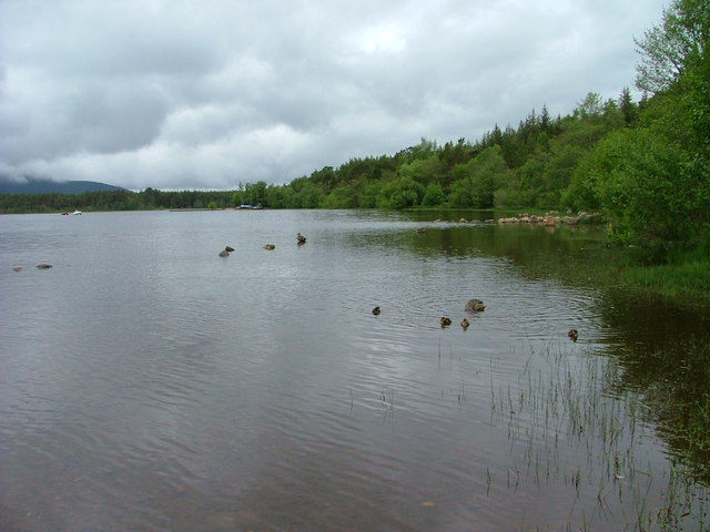 Northern shore of Loch Morlich