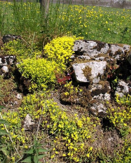 Stonecrop, Townsend