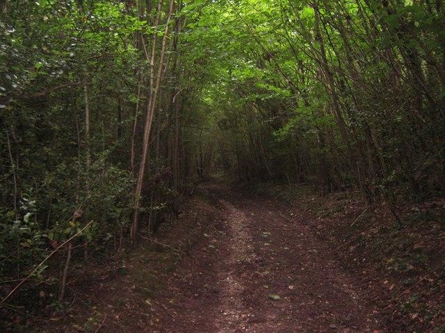Footpath in Dunstan's Wood