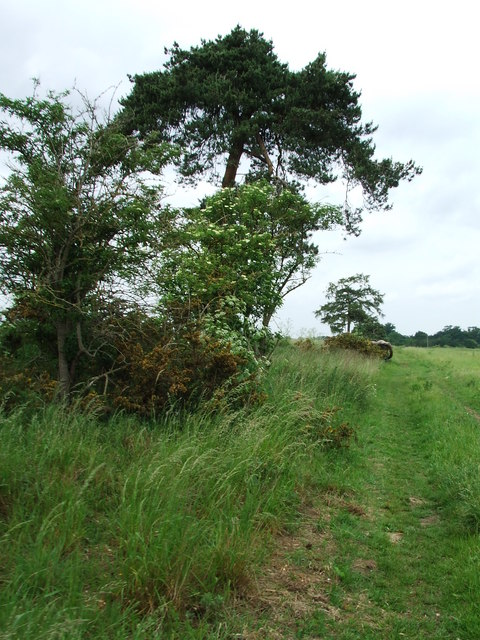 Trees And Footpath
