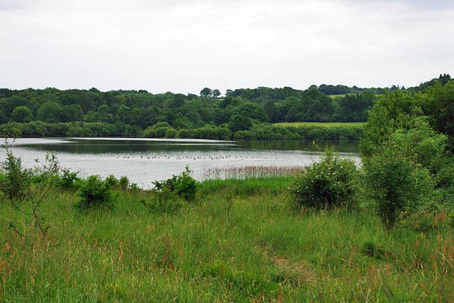 Flotilla of ducks, Weir Wood reservoir