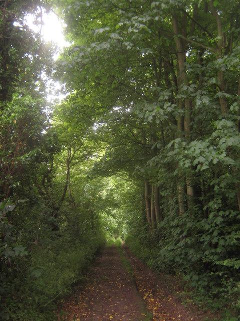 Footpath towards Waltham Road