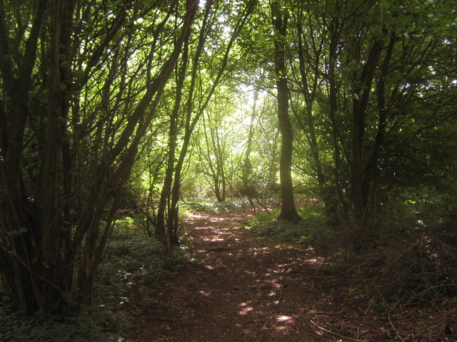Access path in Yawlings Wood