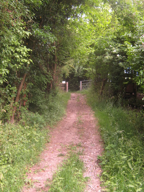 Track to Hobday's Wood