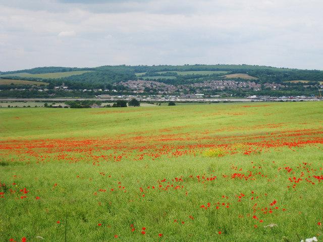Poppy Field off Burham Road