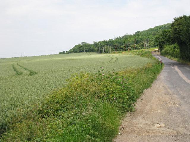 Cropfield along Pilgrims Way