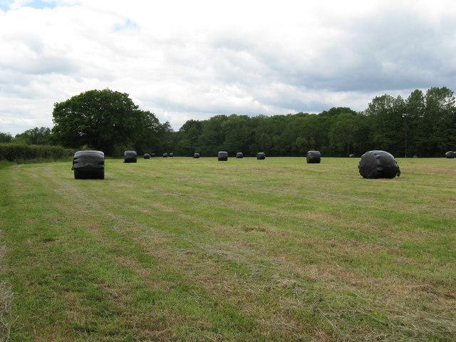 Silage bales near Bradfords Farm