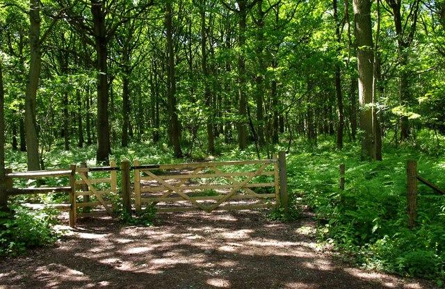 Gate in Wyre Forest near Uncllys Farm