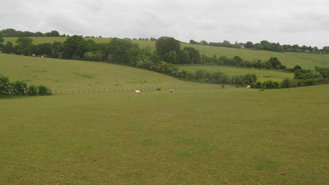 Horse Paddocks near Nightingale Farm