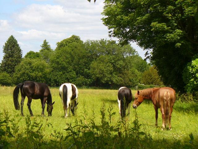 Meadow, Long Sutton