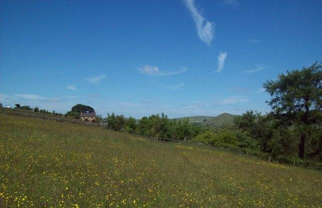 Meadow near Pilsbury Castle Hills