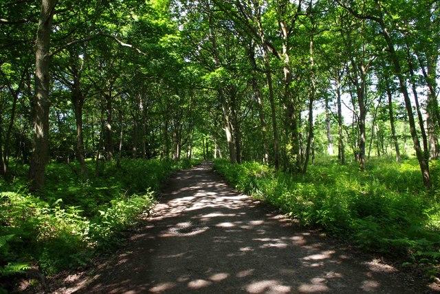 Farm road to Uncllys Farm