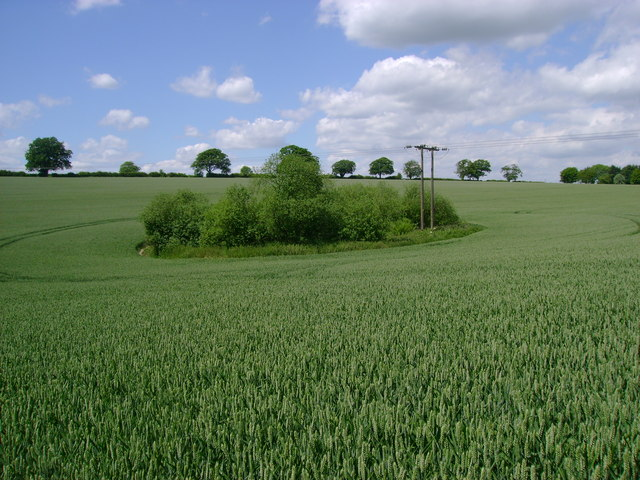Pond  or  Pit  in  Wheat  Field