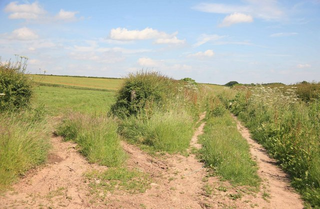 Track into the field nr Laxton