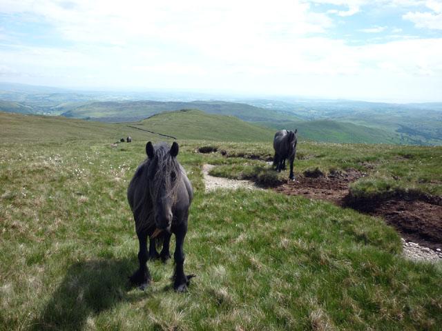 Fell ponies, Kentmere Pike