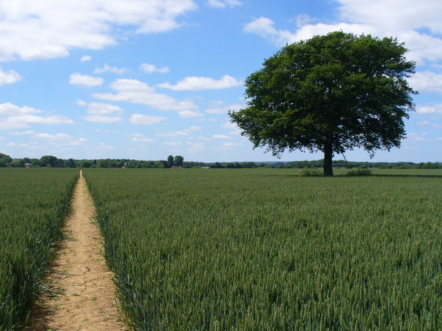 Footpath to Long Sutton
