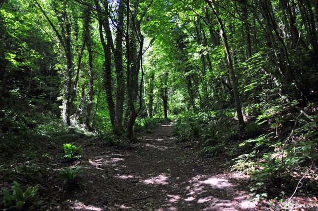Footpath through woods - St Donat's