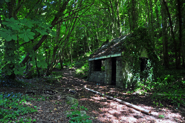 Ruin in the woods - St Donat's