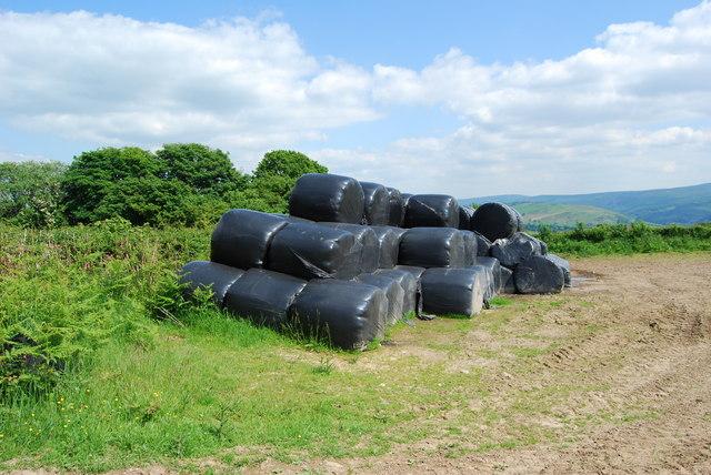 Last seasons haylage bales at Bron-yr-on