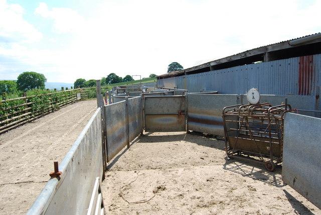 Livestock handling pens at Bron-yr-on