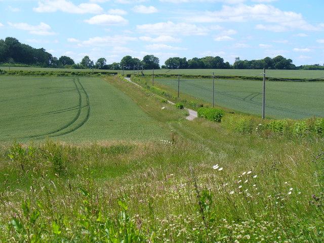 Wheat Fields by Stapeley Farm