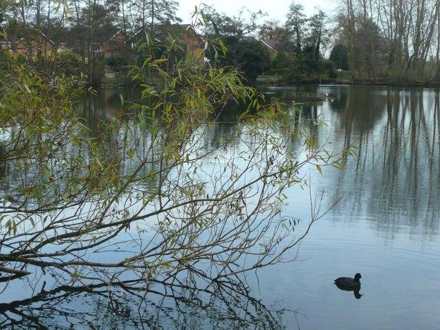 Small lake or large pond, Barton under Needwood