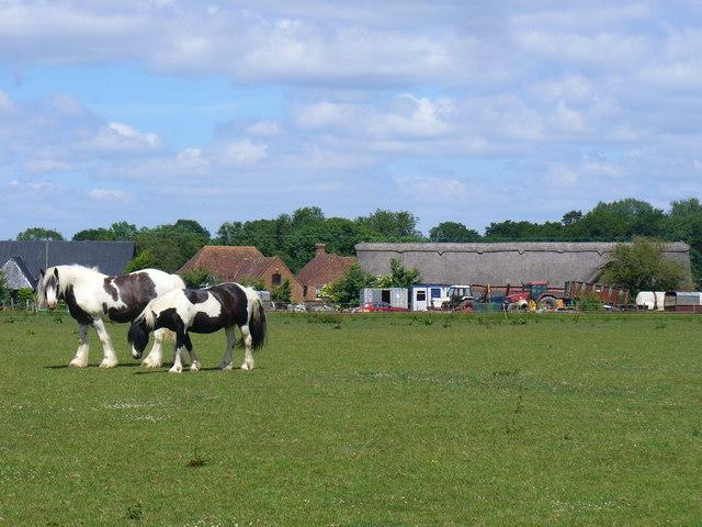 Meadow by Stapeley Farm