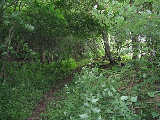 Footpath through Downlands Wood on the edge of Plashett Park